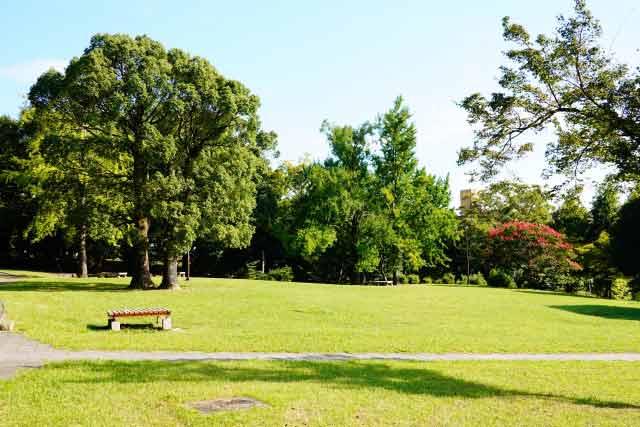 緑がキレイな誰もいない公園